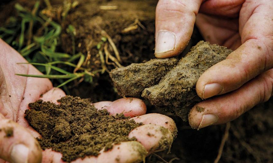 «Unser Boden, unser Erbe» – Eine Doku plädiert für mehr Nachhaltigkeit