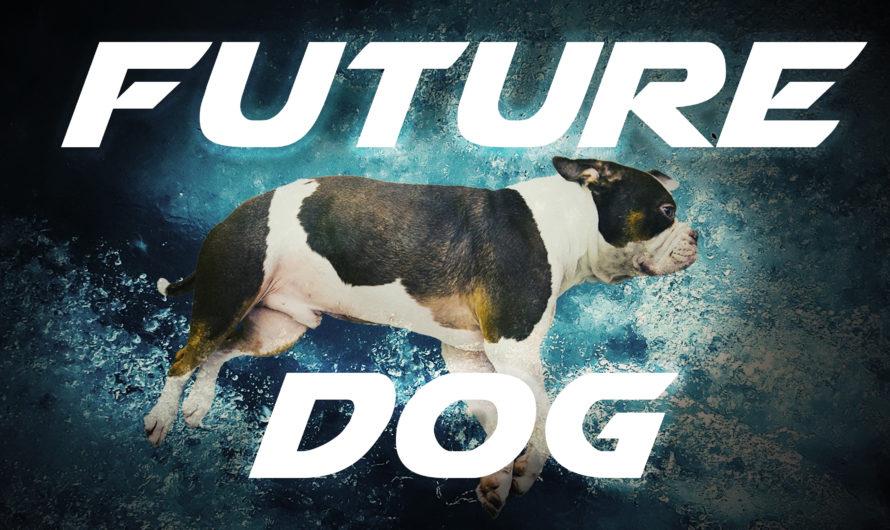 «Future Dog» – Kurzer Science-Fiktion-Film über aktuelle Entwicklungen